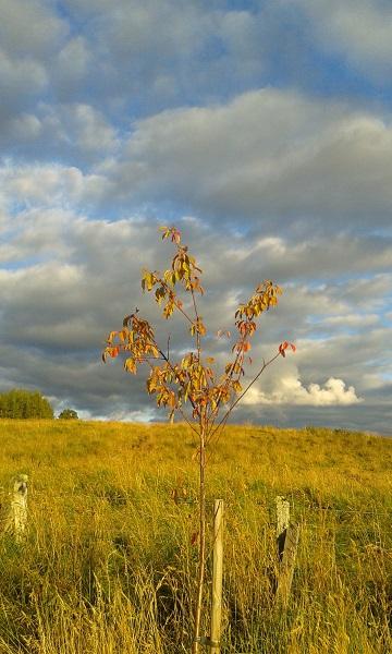 Autumn Tree web size