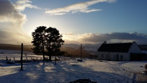 snowy tree sm